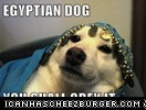 EGYPTIAN DOG.....................YOU SHALL OBEY IT.