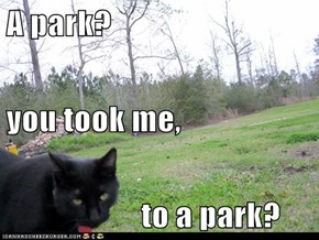 A park? you took me,                       to a park?