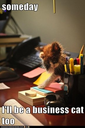 someday  I'll be a business cat too