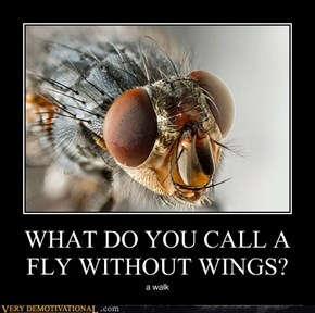 WHAT DO YOU CALL A FLY WITHOUT WINGS?