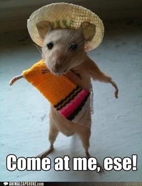 Animal Capshunz: El Ratón Grande