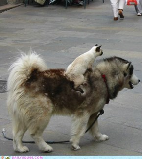 Interspecies Love: Get a Move On!
