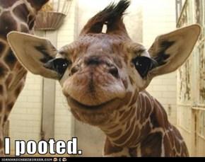 Smug Giraffe