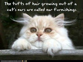 Fun Cat Facts #31