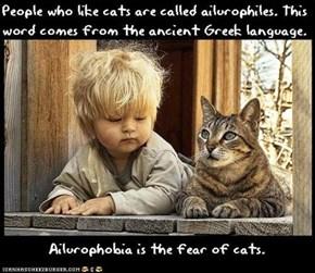 Fun Cat Facts #33