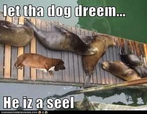 let tha dog dreem...  He iz a seel