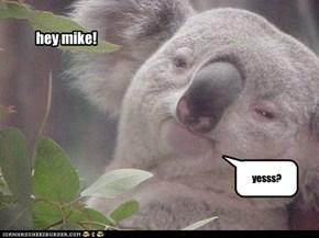 hey mike!
