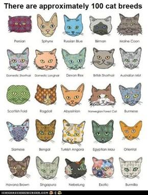 Fun Cat Facts #34