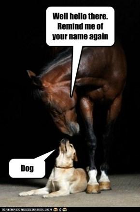 Hello, yes I am Dog