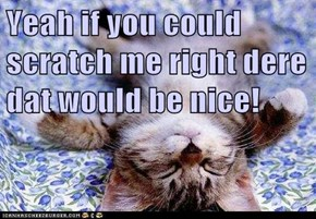 Yeah if you could scratch me right dere dat would be nice!