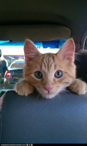 Cyoot Kitteh of teh Day: We Drive to Get Cheezburger?