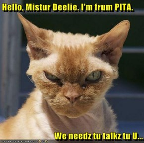 Hello, Mistur Deelie. I'm frum PITA.   We needz tu talkz tu U...