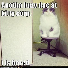 Anotha buzy dae at kitty corp.  i is bored
