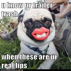 u know ur trailer trash  when these are ur real lips