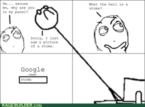 Rage Comics: You're Looking It Up Now, Aren't You?