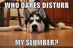 WHO DARES DISTURB   MY SLUMBER?