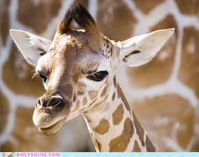 Squee Spree: Baby Giraffe Doesn't Trust You