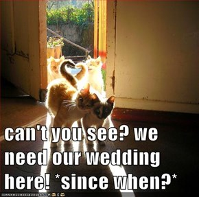 can't you see? we need our wedding here! *since when?*