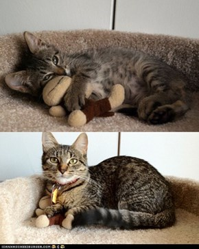 Cyoot Kitteh of teh Day: Lifelong Friends