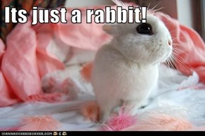Its just a rabbit!