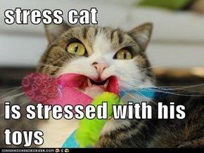 stress cat  is stressed with his toys