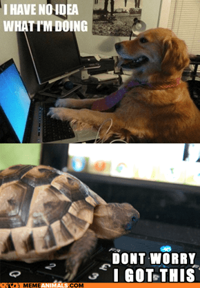 Animal Memes: Techie Tortoise Has You Covered