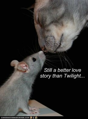 And so the mouse fell in love with the cat...