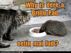 Why  is  dere  a  Brillo  Pad