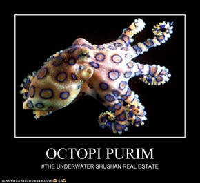 OCTOPI PURIM