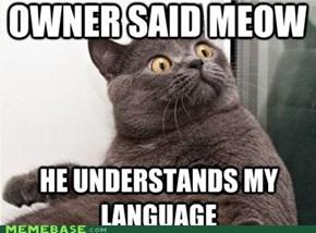 Meme Madness: LOLcats