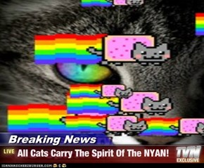 Breaking News - All Cats Carry The Spirit Of The NYAN!
