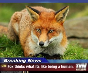 Breaking News - Fox thinks what its like being a human.