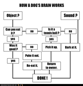 I Has a Hotdog: How a Dog's Brain Works
