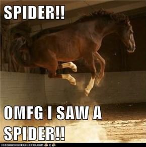 SPIDER!!  OMFG I SAW A SPIDER!!