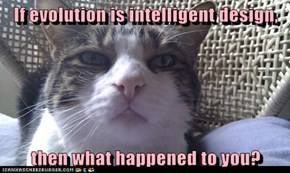 If evolution is intelligent design,  then what happened to you?