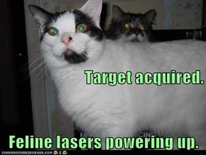 Target acquired. Feline lasers powering up.