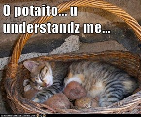 O potaito... u understandz me...