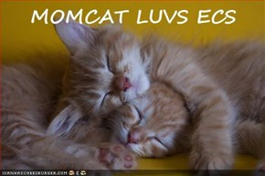 MOMCAT LUVS ECS