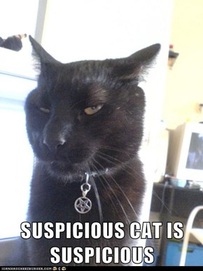 SUSPICIOUS CAT IS SUSPICIOUS