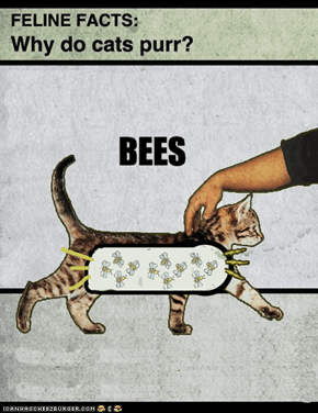 Why Cats Purr, Pt. 2