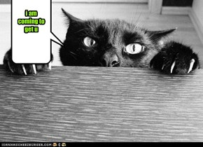DRACULA CAT