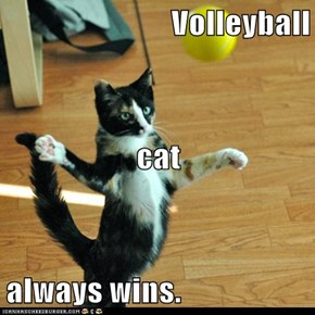 Volleyball  cat always wins.