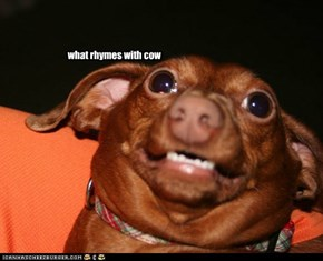 what rhymes with cow