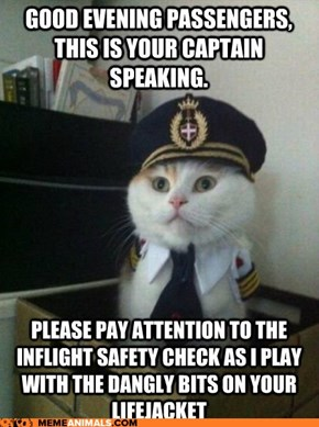 Animal Memes: Captain Kitteh - Just Making Sure They Work