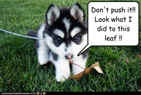 Cyoot Puppy ob teh Day: Don't push it!!