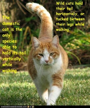 Fun Cat Facts #48