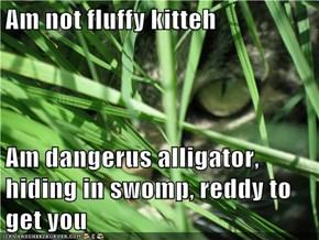 Am not fluffy kitteh  Am dangerus alligator, hiding in swomp, reddy to get you