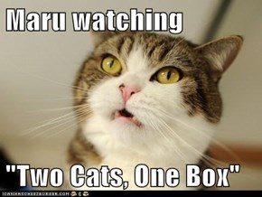 "Maru watching  ""Two Cats, One Box"""