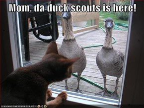 Mom, da duck scouts is here!