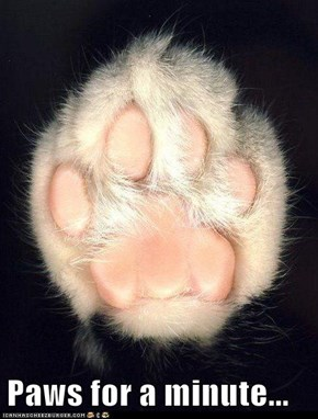 Paws for a minute...